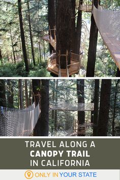 Looking for a unique hike? Travel through the treetops on this aerial adventure course at Trees Of Mystery in California. | Day Trip Ideas | Family Fun | Outdoors | Nature | Date Ideas | Experiences | Best Hikes | Treetop Trail Oregon Travel, California Travel, Northern California, Sequoia National Park, Us National Parks, Places To Travel, Places To See, Travel Destinations, Dream Dates
