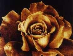 wood burned rose  pyrography