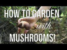 Grow Your Own Mushrooms, Growing Mushrooms, Edible Mushrooms, Stuffed Mushrooms, Companion Gardening, Permaculture Garden, Vegetable Gardening, Growing Herbs, Farm Gardens