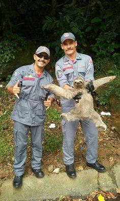 Two brazilian fireman rescued a pretty fabulous sloth.. http://ift.tt/2ntDxPP
