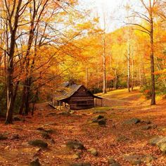 Autumn cabin.