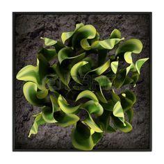 scleranthus uniflorus scleranthus uniflorus pinterest plante jardin. Black Bedroom Furniture Sets. Home Design Ideas
