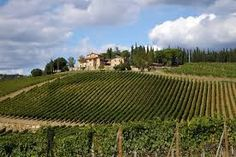 Image result for italian vineyards