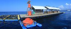Gambar terkait Underwater, Train, Park, Under The Water, Parks, Strollers
