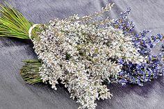 White lavender.