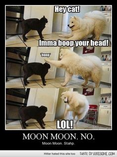 Moon moon! Stahp! I'm sorry, but these are hilarious.