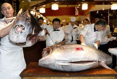 1st auction of 2014 in Tokyo Japan, sells bluevin tuna for $70.000.