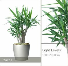 Our selection of high light plants suit any workspace, from office reception areas to window side desks, we can find the perfect live plant for you.