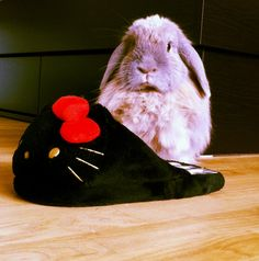 Hello Bunny.