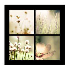indian summer - four pastel romantic flower photographs