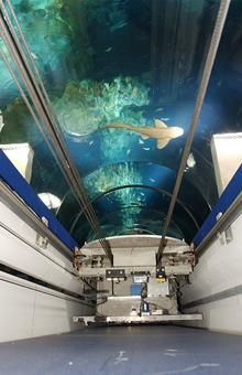 The Deep Aquarium. Hull, England (Sofia was born in Hull)