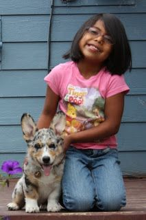 We do not raise dogs to show, although you might want to show them off! Cowboy Corgi, Cardigans For Women, T Shirts For Women, Cardigan Welsh Corgi, Adorable Puppies, Best Bud, Blue Merle, Corgi Dog, Corgis