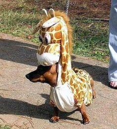 Disfraces para Mascotas en Halloween - Disfraz de Jirafa para perros