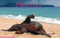 It`s Friday!
