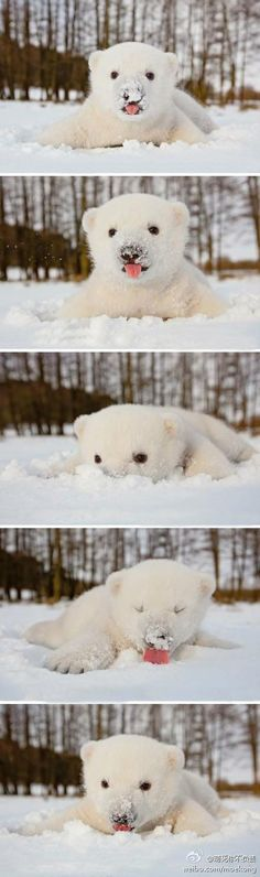 Polar bear cub sees snow for the first time.