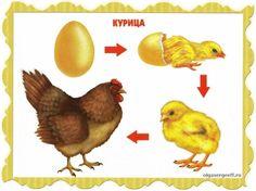 Image may contain: bird Montessori Toddler, Montessori Activities, Kindergarten, Farm Unit, Animal Activities, Farm Theme, Montessori Materials, Exercise For Kids, Life Cycles