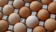 La yema del huevo ~ MUSCULACION PARA PRINCIPIANTES