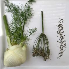 Fennel Friends the plant that keeps on giving