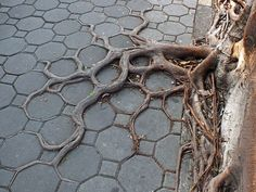 Mankind's relationship with nature is a difficult one – we must use it, live in harmony with it, protect it and protect ourselves from it. These visually striking images that we collected of tree roots colliding with concrete are beautiful symbolic representations of this complicated relationship. It's hard to say what it is exactly about tree roots that capture our imagination, but they have done so for thousands of years.