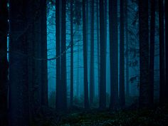 Blue Moon over a Mystical Forest ~ Cologne, Germany