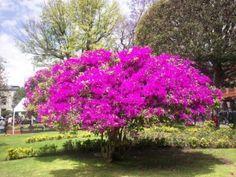 2230 Mejores Imágenes De Plantas De Exterior E Interior En 2019