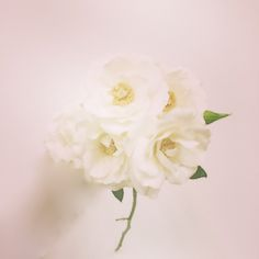 florals by swell botanics
