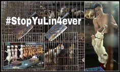 June 21st: Thousands of dogs will be BOILED ALIVE at dog meat festival in China! Save them now!