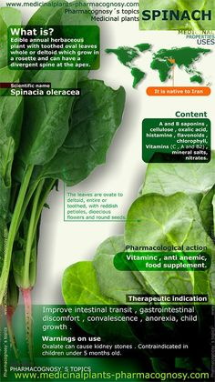http://www.medicinalplants-pharmacognosy.com/herbs-medicinal-plants/spinach/ Spinach benefits. Infographic. Summary of the general characteristics of the Spinach. Medicinal properties, benefits and uses more common of Spinach. http://www.medicinalplants-pharmacognosy.com/herbs-medicinal-plants/spinach/