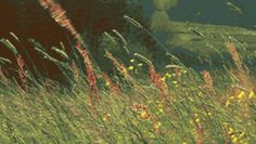 Animated gif shared by Carol Owens. Find images and videos about gif, flower and wind on We Heart It - the app to get lost in what you love. Mundo Gif, Miss Clara, Foto Gif, Anime Gifs, Meadow Garden, Nature Gif, Gif Animé, Aesthetic Gif, Wild Flowers