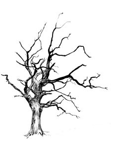 Drawing by Jacob Yona. A pen drawing of a dead tree. Tattoos Arbol, Dead Tree Tattoo, Abstract Tree Painting, Ink Pen Drawings, Tree Drawings, Tree Sketches, Forest Illustration, Pen Sketch, Tree Silhouette