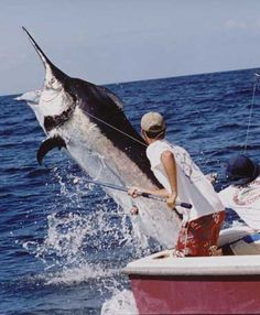 Black Marlin #pinit