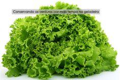 PANELATERAPIA - Blog de Culinária, Gastronomia e Receitas: Como Conservar Verduras na Geladeira