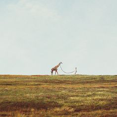 oh just taking my giraffe for a walk.