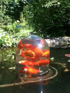 Inverted Fish Bowl in Garden Pond