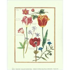 """Art Print By Nicholas Robert Different types of Flowers RB001A Size (8"""" x 10"""") -- $0.50"""