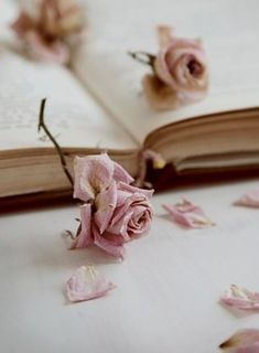 """when the flowers that we've grown together died of thirst"" Book Flowers, Book Letters, Pretty Roses, Rose Cottage, Desert Rose, Book Photography, Pinterest Photography, Everything Pink, Photo Instagram"