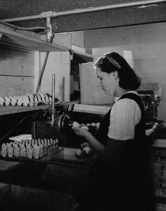 Le mirage des oeufs à la coopérative avicole des Bois-Francs à Victoriaville / Omer Beaudoin . - 1948 BAnQ, E6,S7,SS1,P66296