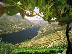 Rio Douro e a sua vinicultura - Porto - Portugal.