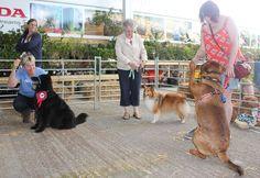 Left to right Sam Oliver, Daisy-Mae Thomas and Bear Needham Daisy Mae, Dog Show, Camel, Bear, Dogs, Animals, Animales, Animaux, Doggies