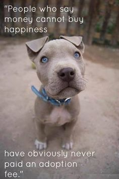 Do you love pitbulls?! Want to help them?? Please visit http://www.gofundme.com/Pennies4Pitbulls and donate if you can!! Thanks!! <3