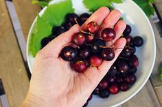 sweet miscellany: Wild Foraging - Spiced Muscadine Butter #vegan #glutenfree