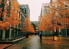 Rainy days  on campus are made a little less gloomy with fall's signature hues. |  by @layth.hert