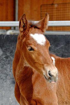 Fohlen 2014 - Riverside Curly Horse Ranch - Europa's größte Curly Zucht