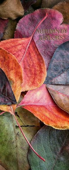 Autumn by Colors...
