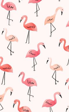 Xxx flamingo background