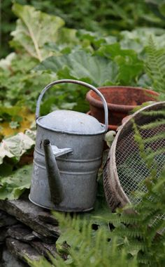 Old Zinc Watering Can.