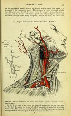 """This is what a diagram of arteries in the human neck looked like in the 1860 British edition of Henry Gray's """"Anatomy: Descriptive and Surgical."""""""