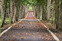 Woodland, Road, Falling Leaf, Natural