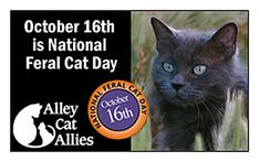 Oct. 16, 2016 | National Feral Cat Day – Cat Daily News.