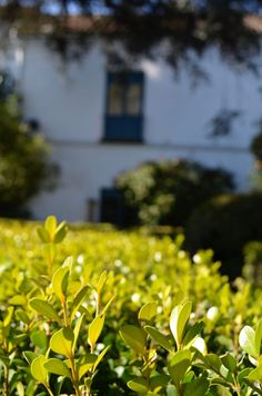 Palacio de Viana. Cordoba, España. via the Suitcase Lioness blog. Photo credit .:. Amy Lucas